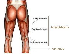 Musculos isquiotibiales
